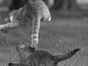 Fight, cats