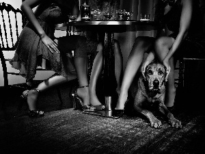 Table, legs, Bloodhound