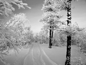 winter, snow, trees, viewes
