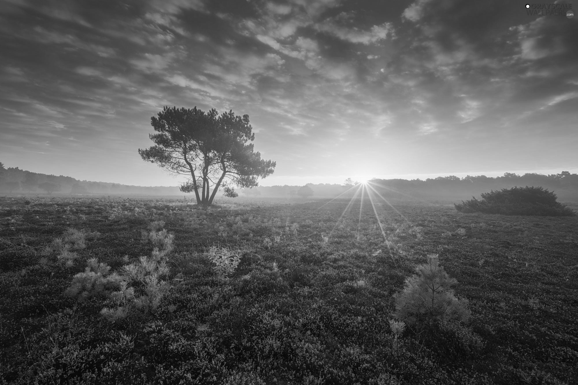 heath, Great Sunsets, trees, Meadow, Netherlands, heathers, viewes