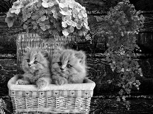 basket, Flowers, tiny, puss, sweet