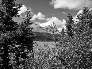 Moraine, Mountains, Chamerion, Willowherb, Spruces, lake