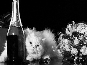 White, bouquet, Champagne, kitten