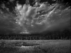 swampy, forest, clouds, Meadow