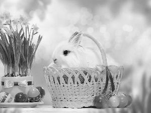 Daffodils, basket, Wild Rabbit, eggs, Easter