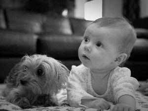 Yorkshire Terrier, Kid, doggy
