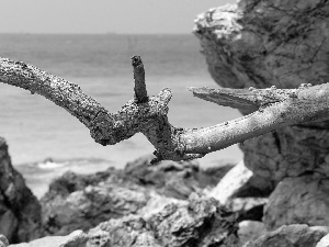 dry, branch, Waves, rocks, sea