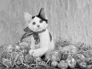 eggs, Easter, cat