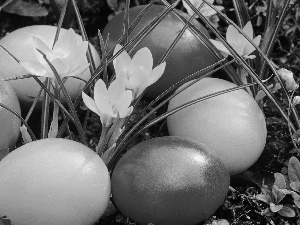 Easter, crocuses, eggs, Yellow