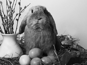 eggs, Easter, Bunny, Palms, Gray