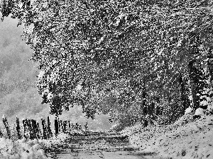 viewes, Way, Fance, snow, Leaf, trees