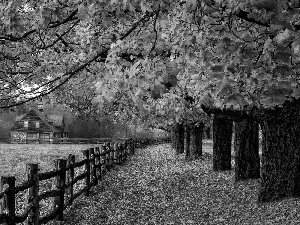 house, trees, Leaf, viewes, Way, fence, autumn