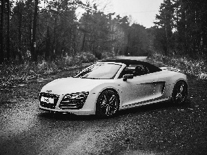 Way, Audi R8, forest