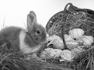 eggs, Rabbit, grass, Easter, Hay, basket