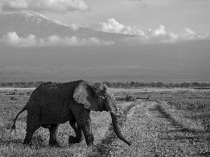 Elephant, Way, grass, Mountains
