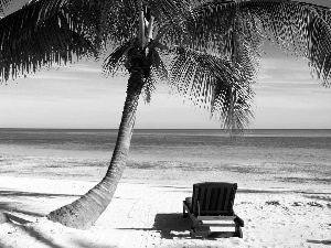 hammock chair, holiday, Palms, Beaches, water