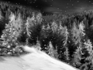 Mountains, winter, forest, christmas tree, Spruces