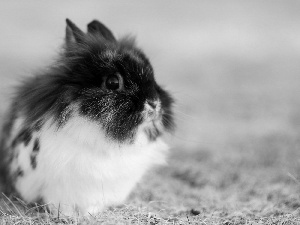 small, Rabbit