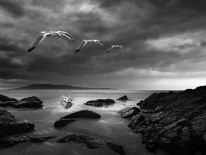 rocks, gulls, Coast