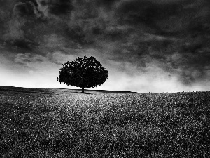 trees, dark, Sky, Field