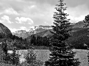 Spruces, lake, Mountains