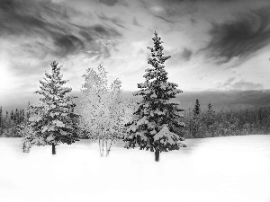winter, forest, Spruces, snow