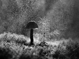 ligh, forest, flash, Rain, Mushrooms, sun, luminosity