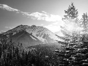 Banff National Park, rocky mountains, Sunrise, forest, viewes, Province of Alberta, Canada, trees