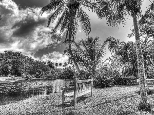 trees, viewes, River, Bench, Palms