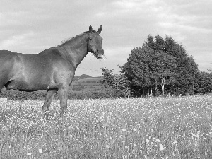 Horse, trees, viewes, Meadow