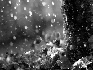 viewes, Rain, trunk, trees, Violets
