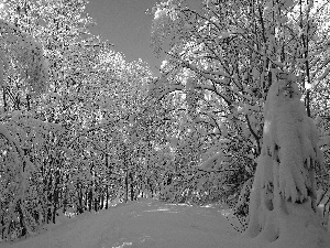winter, trees, viewes, snowy