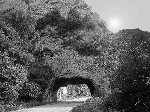 Way, tunnel, trees, viewes, Rocks