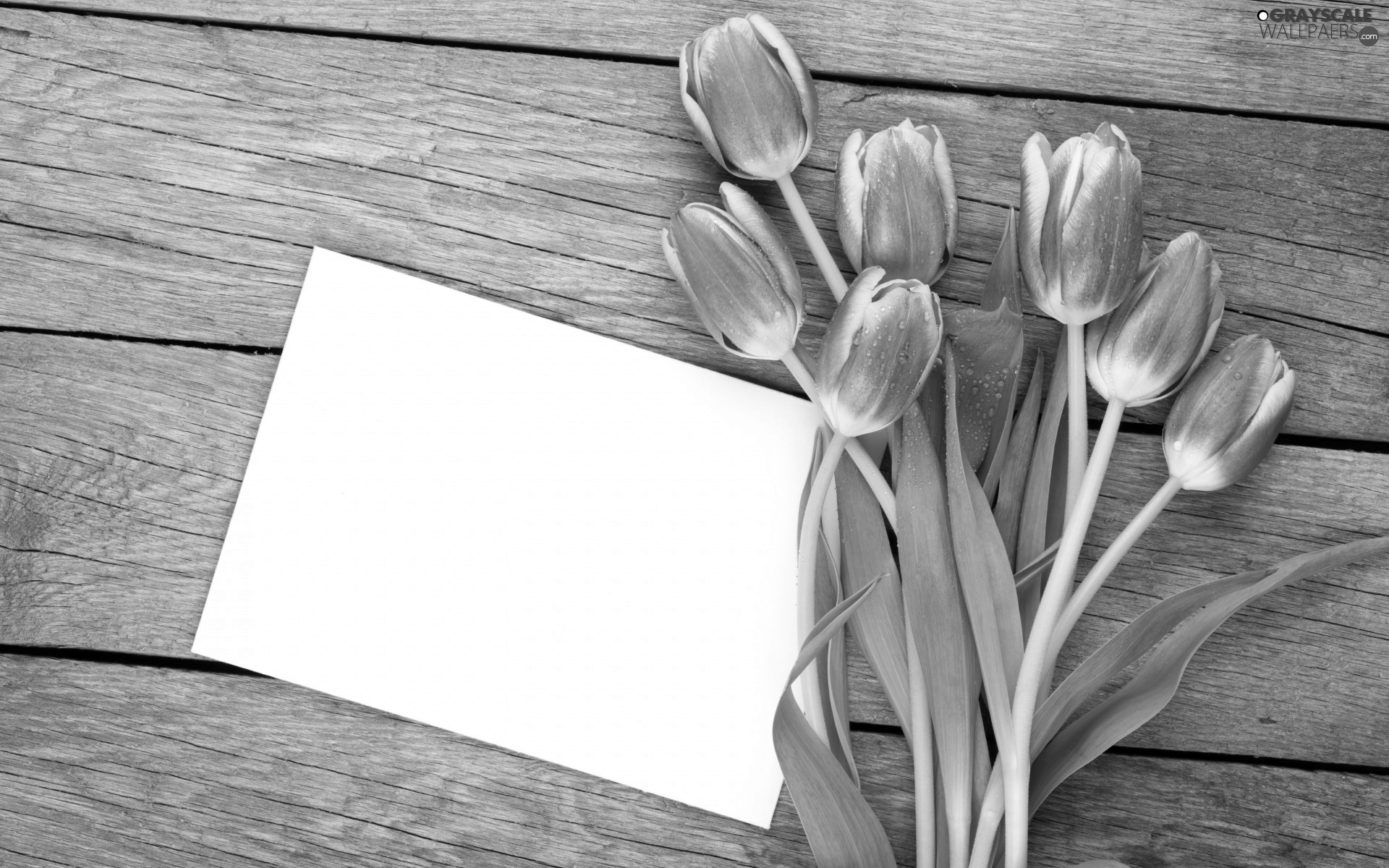 Tulips, bouquet, card, Red-White, Flowers, Leaf, boarding