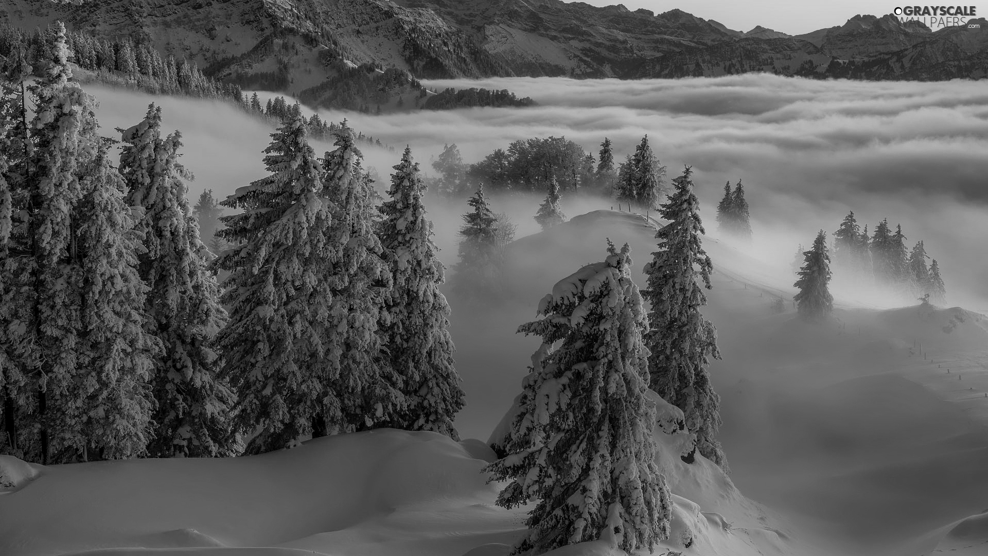viewes, winter, Mountains, Fog, Spruces, trees