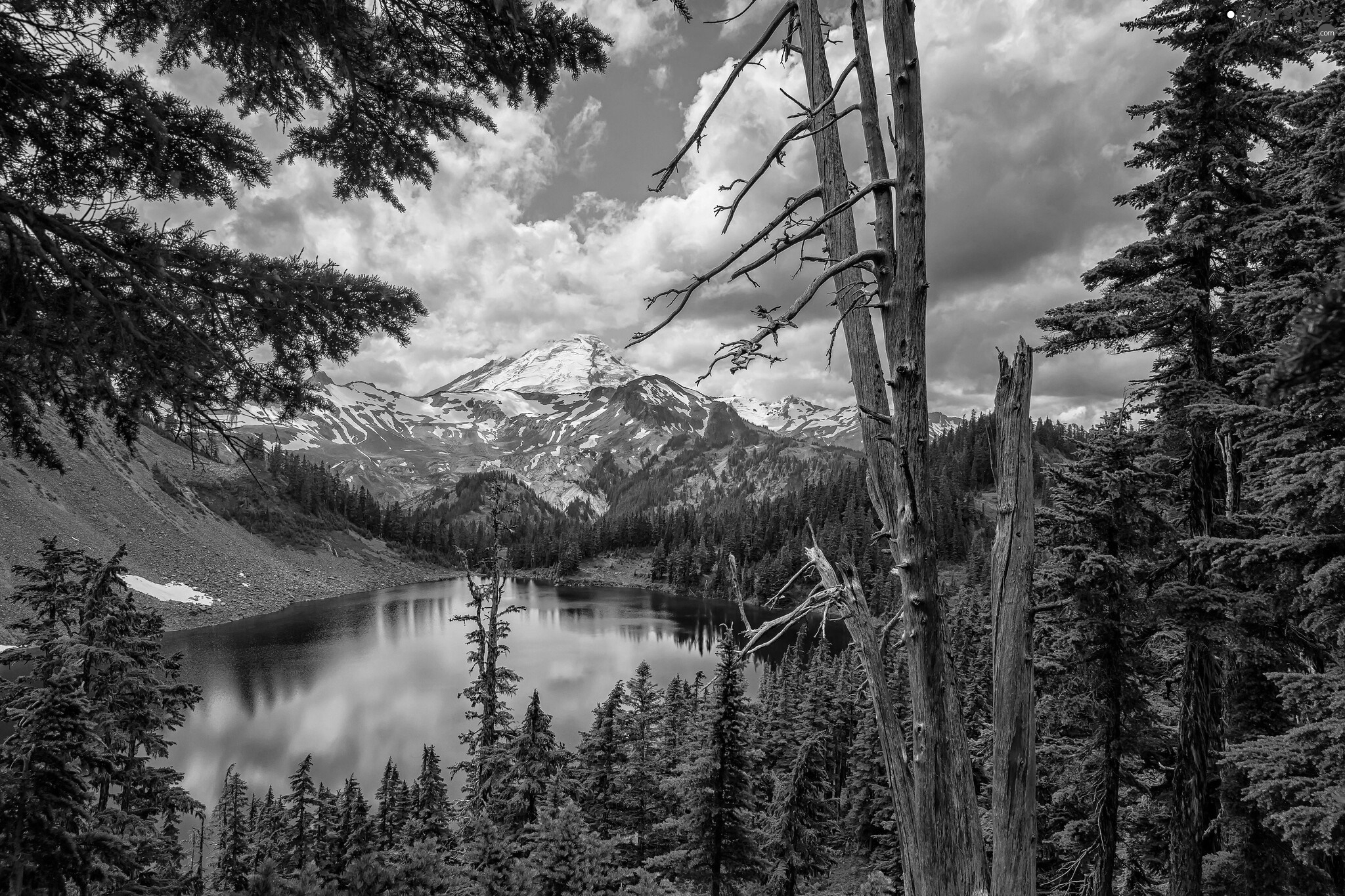 viewes, lake, woods, Mountains, Spruces, trees