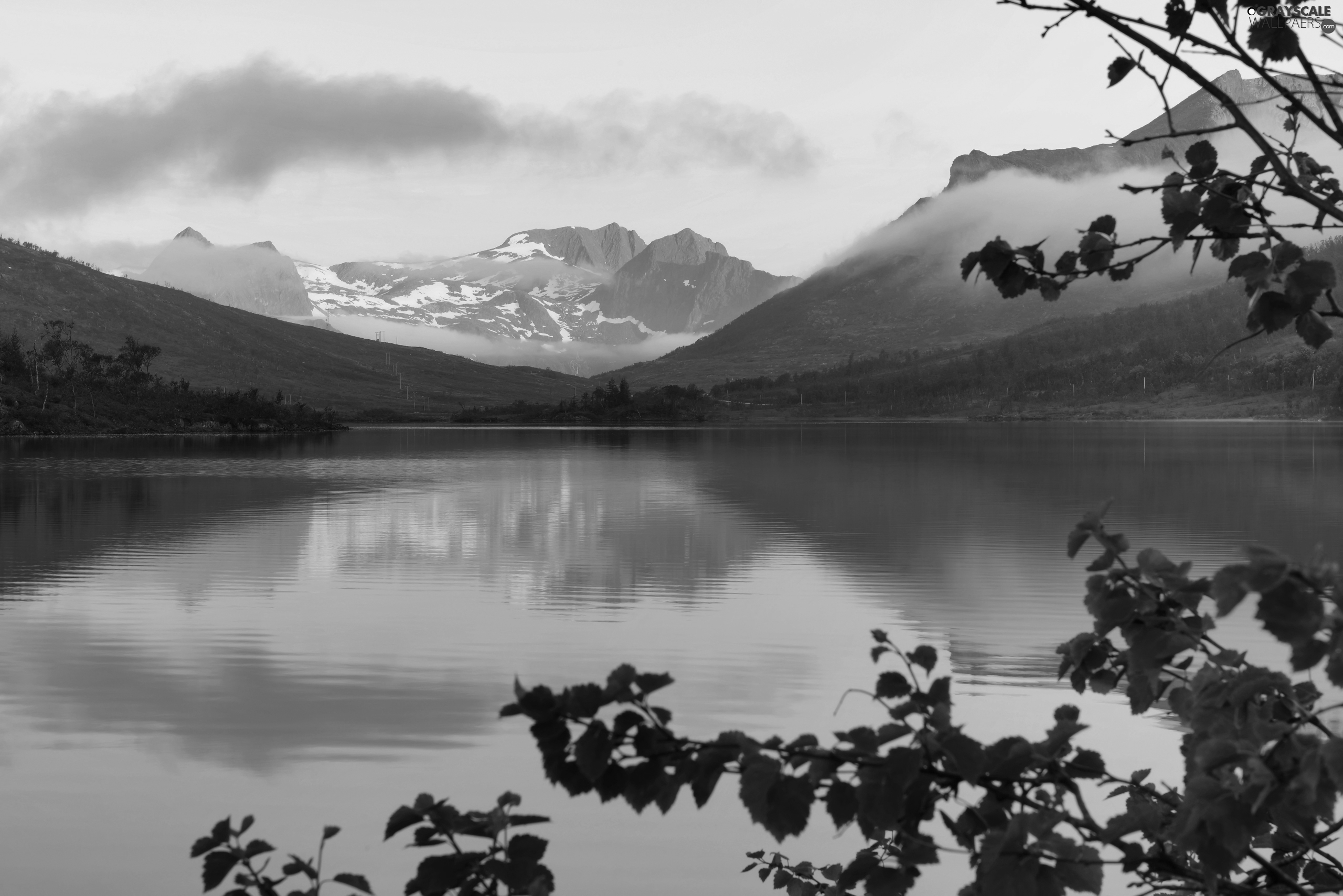 Mountains, lake, trees, viewes, Senja Island, Norway, Fog, reflection, branch pics
