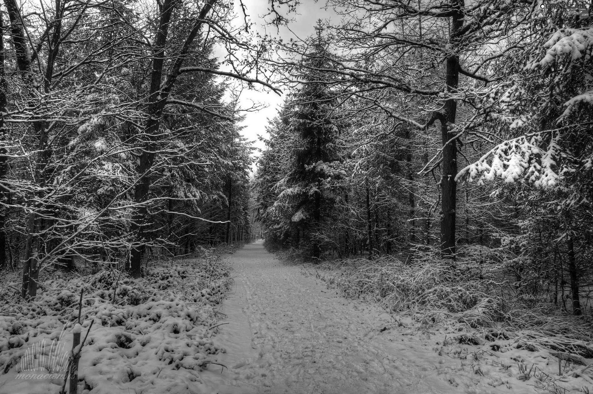 trees, forest, winter, snow, viewes, Way