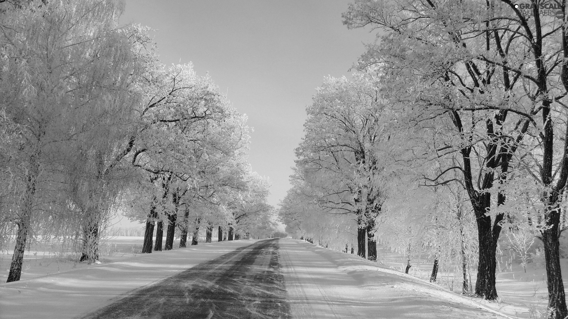 Way, winter, viewes, snow, trees