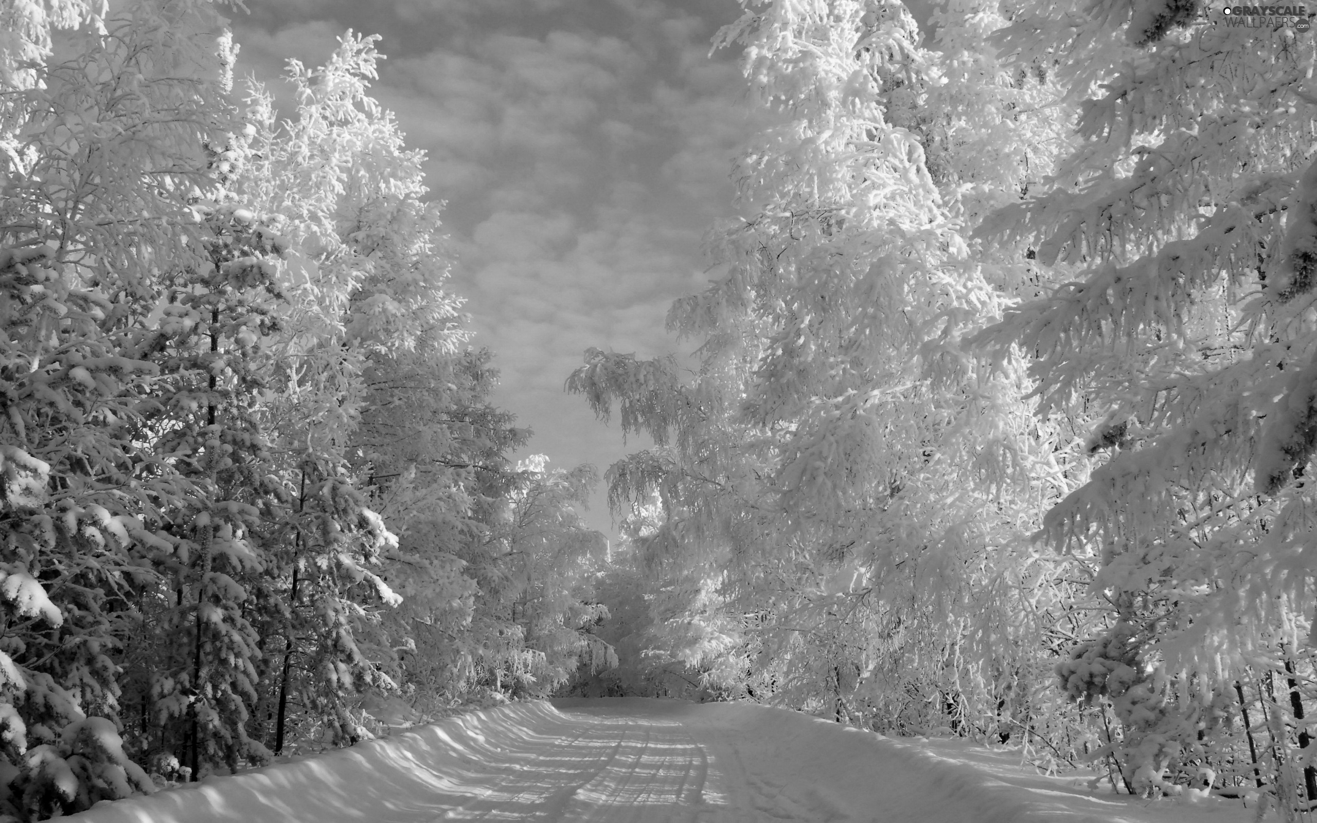Way, forest, winter, by